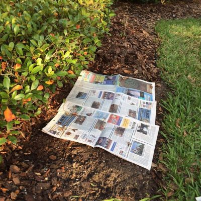 How Newspaper Can Prevent Weeds In the Garden