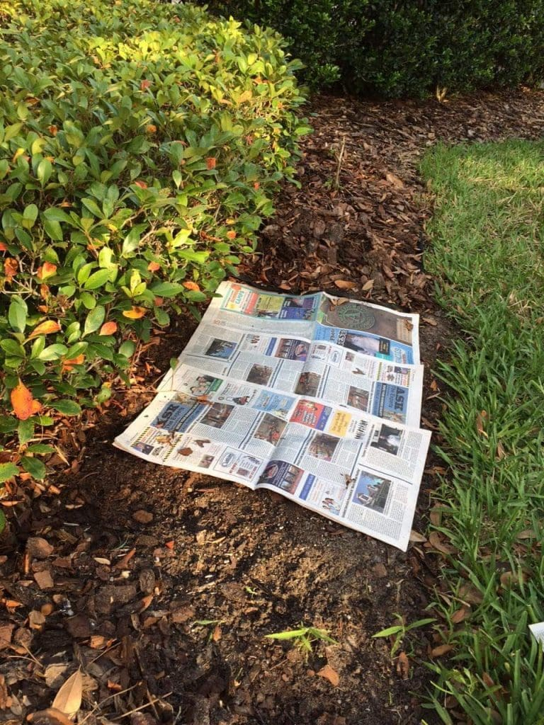 sheets of newspaper lying on dirt under mulch in garden