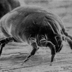 Five Ways to Kill Dust Mites