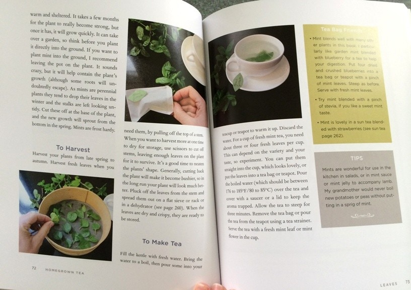 open pages of homegrown tea book