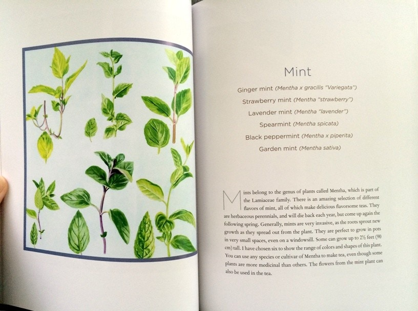 Homegrown Tea book illustration of mint leaves