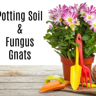 Potting Soil and Fungus Gnats Infestation