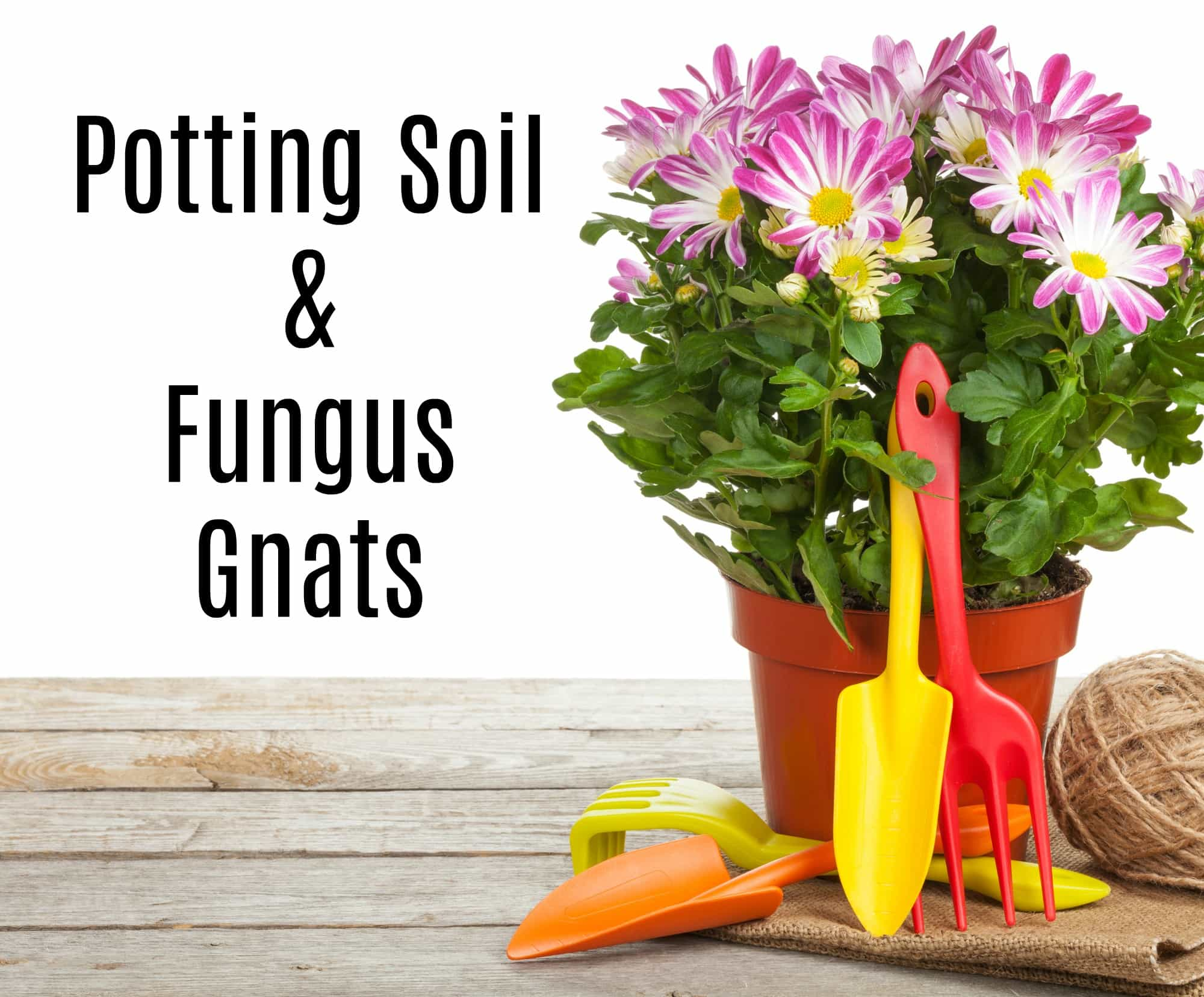 Potting Soil and Fungus Gnats Infestation - Get Green Be Well