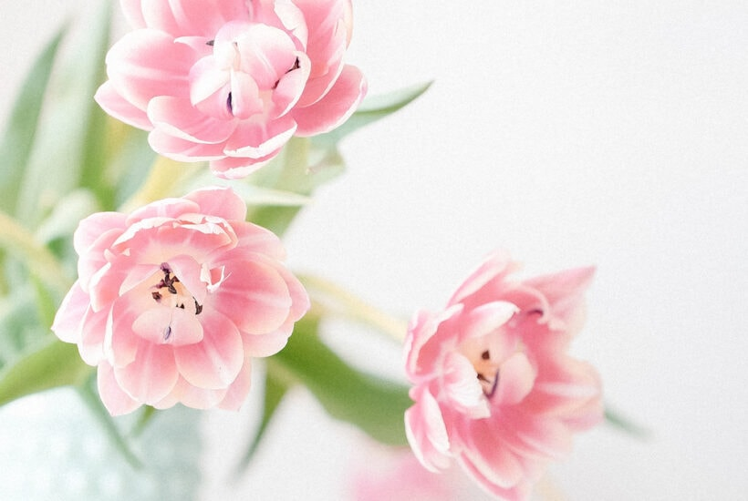 pink flowers in blue pot against white wall