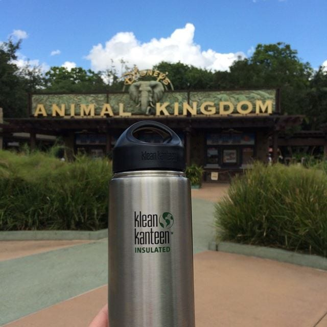 Klean Kanteen water bottle in front of disney animal kingdom sign