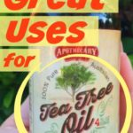 7 Great Uses for Apothecary Extracts Tea Tree Oil