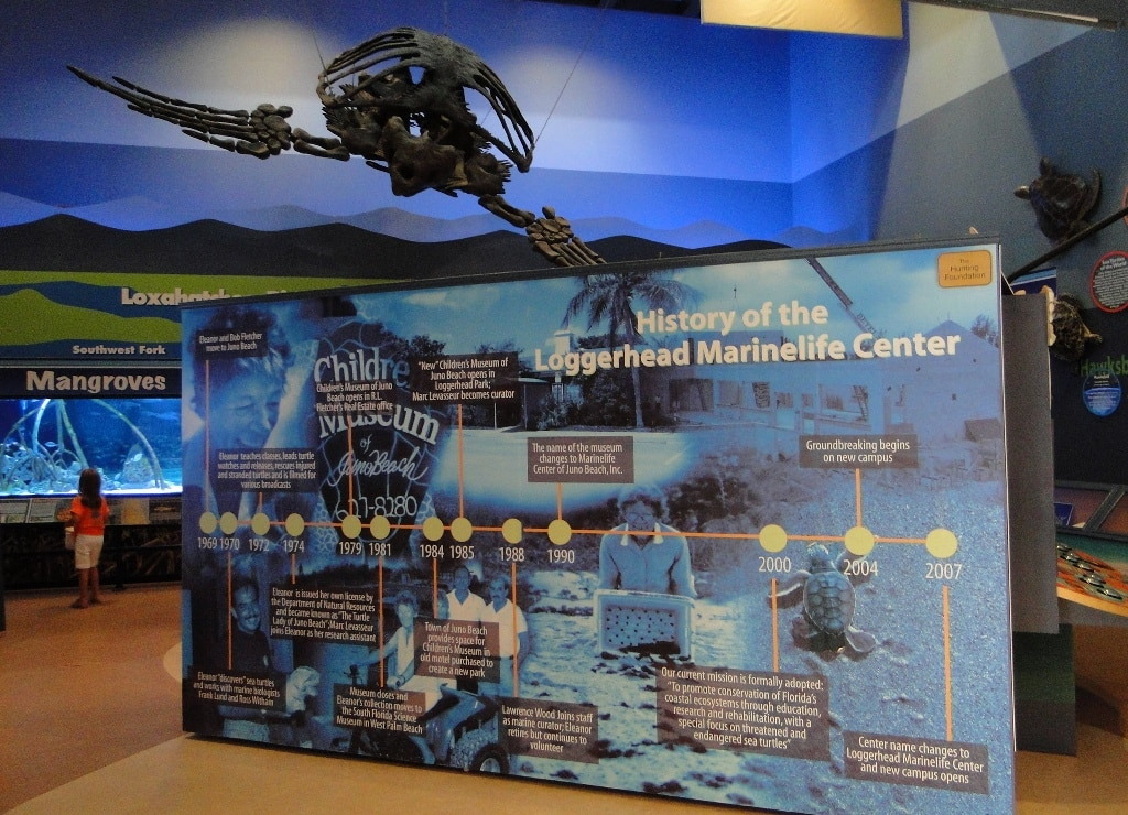 loggerhead exhibits