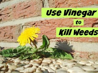 How to Use Vinegar to Kill Weeds. A non-toxic, cheap solution to killing weeds naturally.