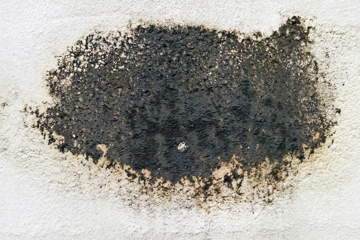 black mold on white background