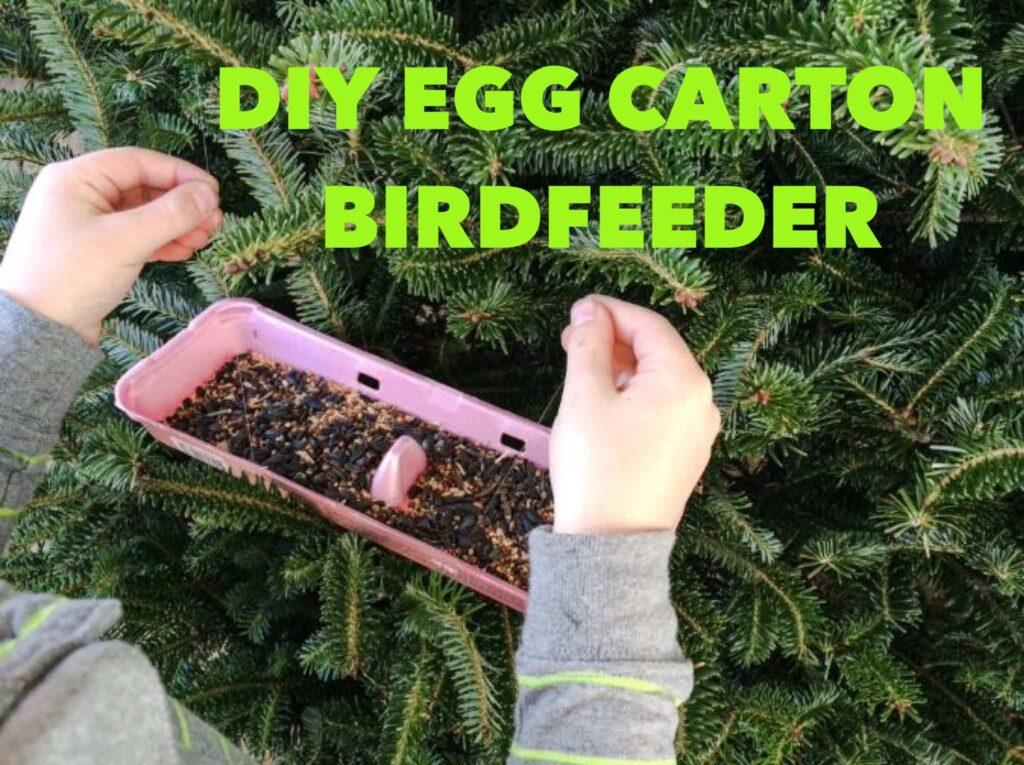 DIY Egg Carton Birdfeeder Craft Project for Kids