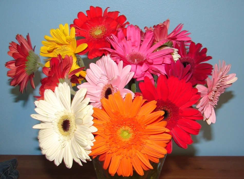 best online flower delivery Gerber Daisy Bouqet
