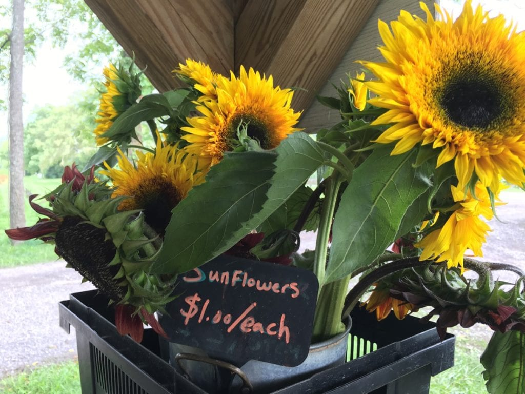 U-Pick Wildflowers near Asheville, NC at Flying Cloud Farm. Grown organically, located in Fairview.
