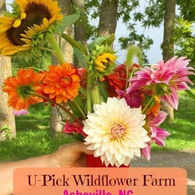 Flying Cloud Farm U-Pick Flower Fields in Asheville, NC