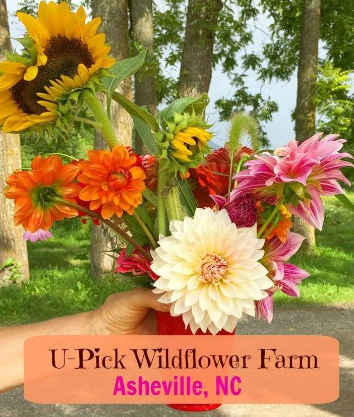 U-Pick Wildflowers near Asheville, NC at Flying Cloud Farm. Grown organically, located in Fairview. A fun stop to buy produce and create a flower bouquet.