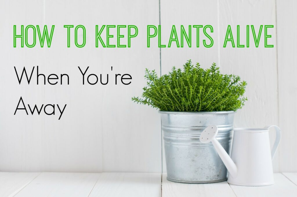 How to Keep Plants Alive While on Vacation