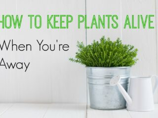 How to Keep Plants Alive Pinterest