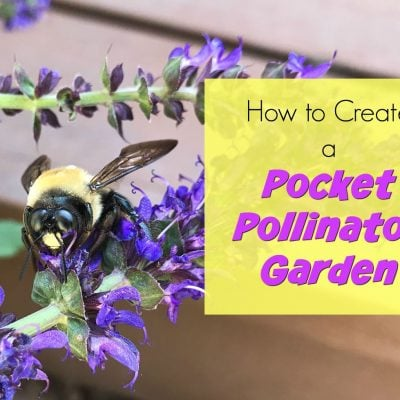 How to Make a Pocket Pollinator Garden