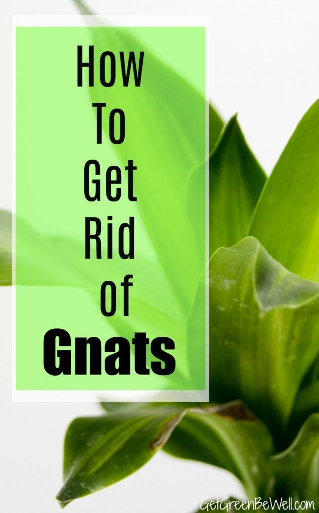 Natural Ways To Kill Gnats In Your Home