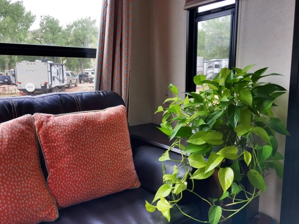 Golden Pothos Plant in an RV