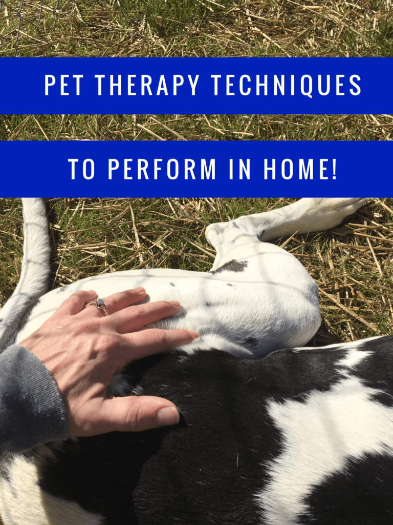 Pet Therapy Techniques You Can Do at Home