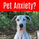 Comfort For Pets In Stressful Situations with ThunderWorks