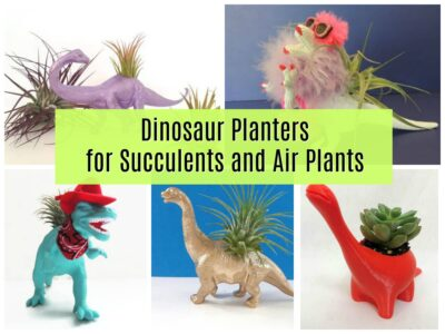 dinosaur planters with succulents and air plants