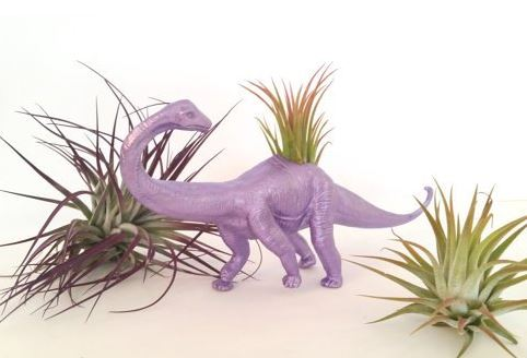 purple plastic dinosaur with air plant growing in back and air plants on white table
