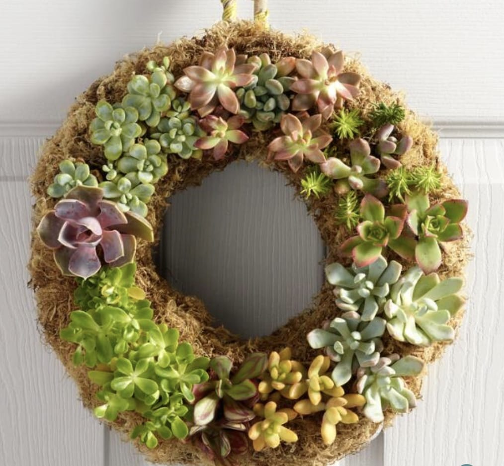 moss wreath covered in succulents
