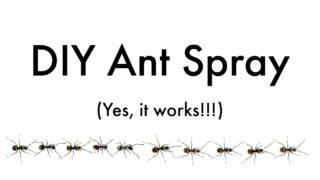 line of black ants under ant spray DIY