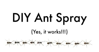 line of black ants under ant spray DIY