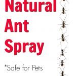 Ants in a Line Ant Spray DIY Instructions