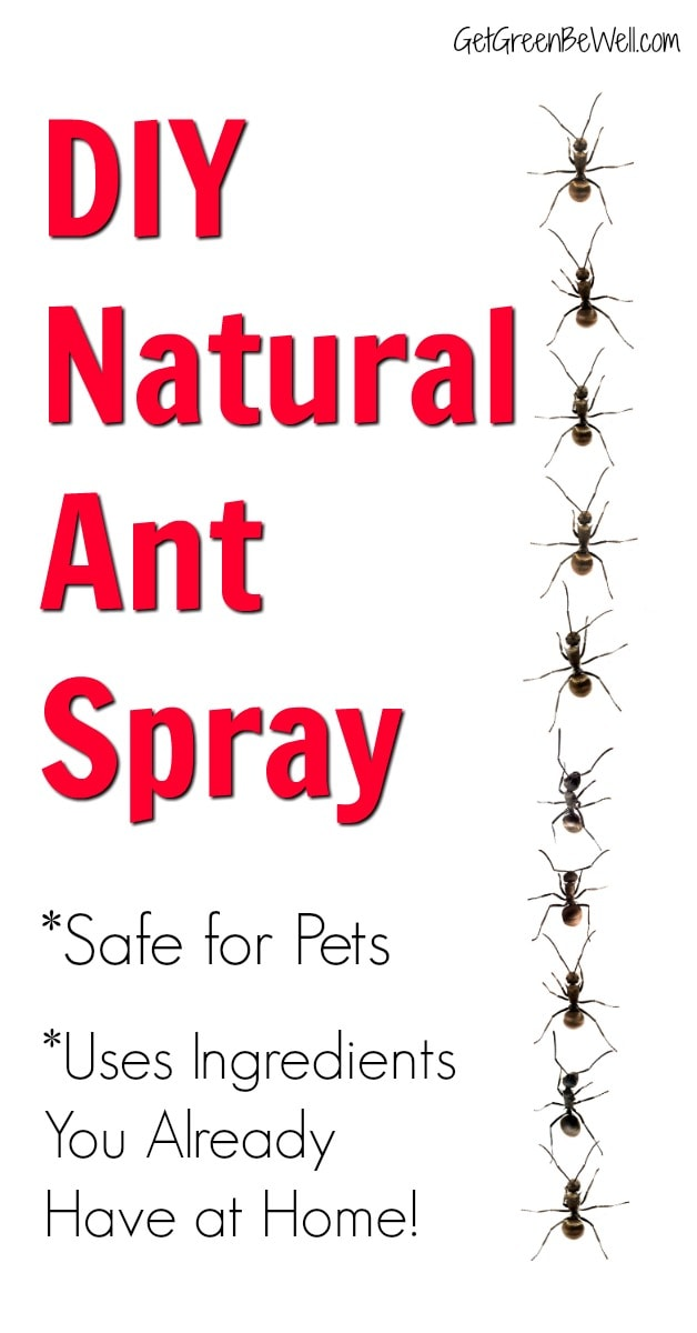 DIY Ant Spray Safe for Pets - Get Green Be Well