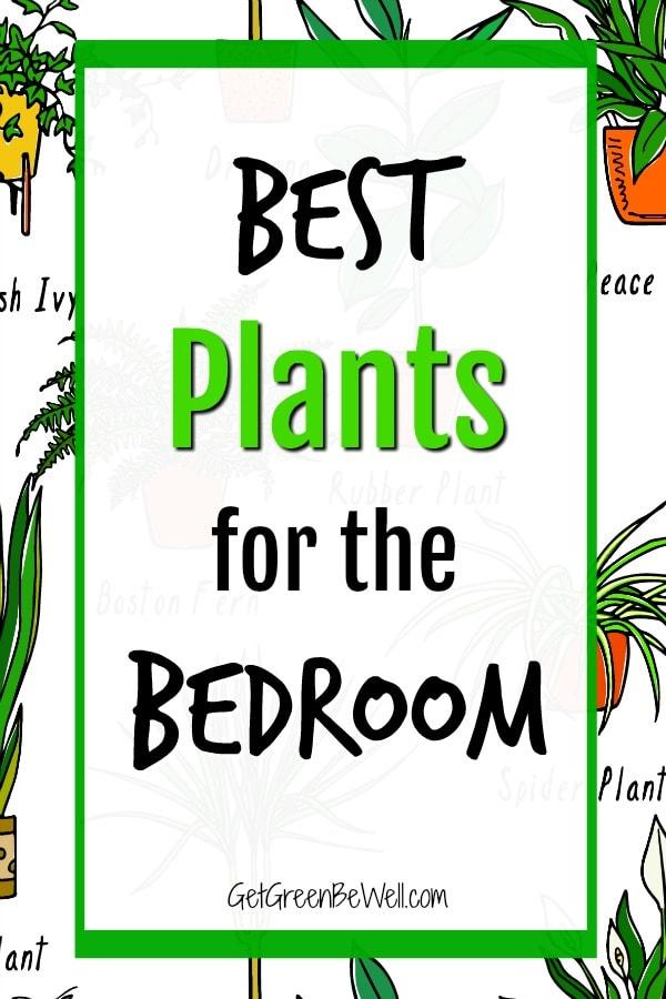Best Bedroom Plants Drawings Of Houseplants