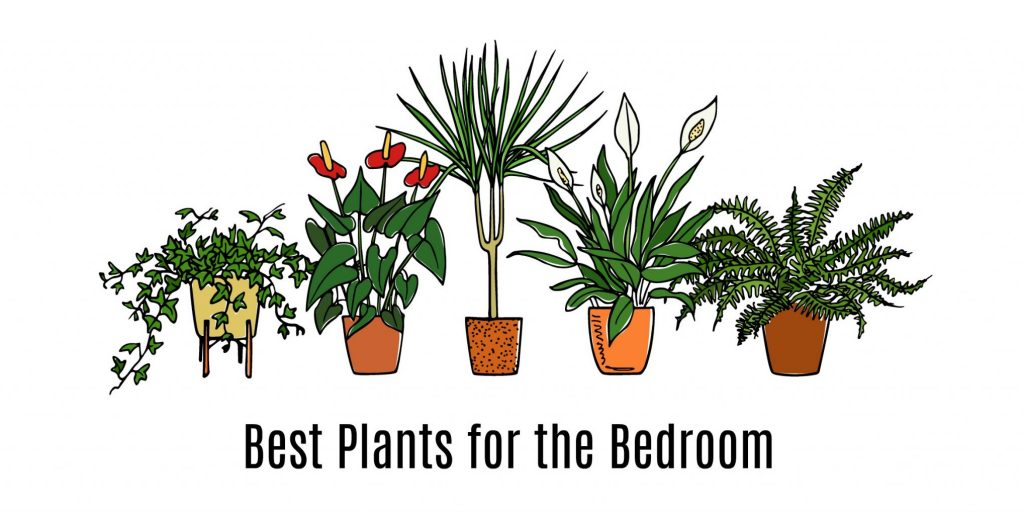 Hand Drawn Houseplants in pots