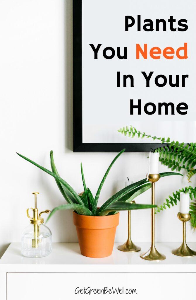 aloe vera plant on white shelf against white wall
