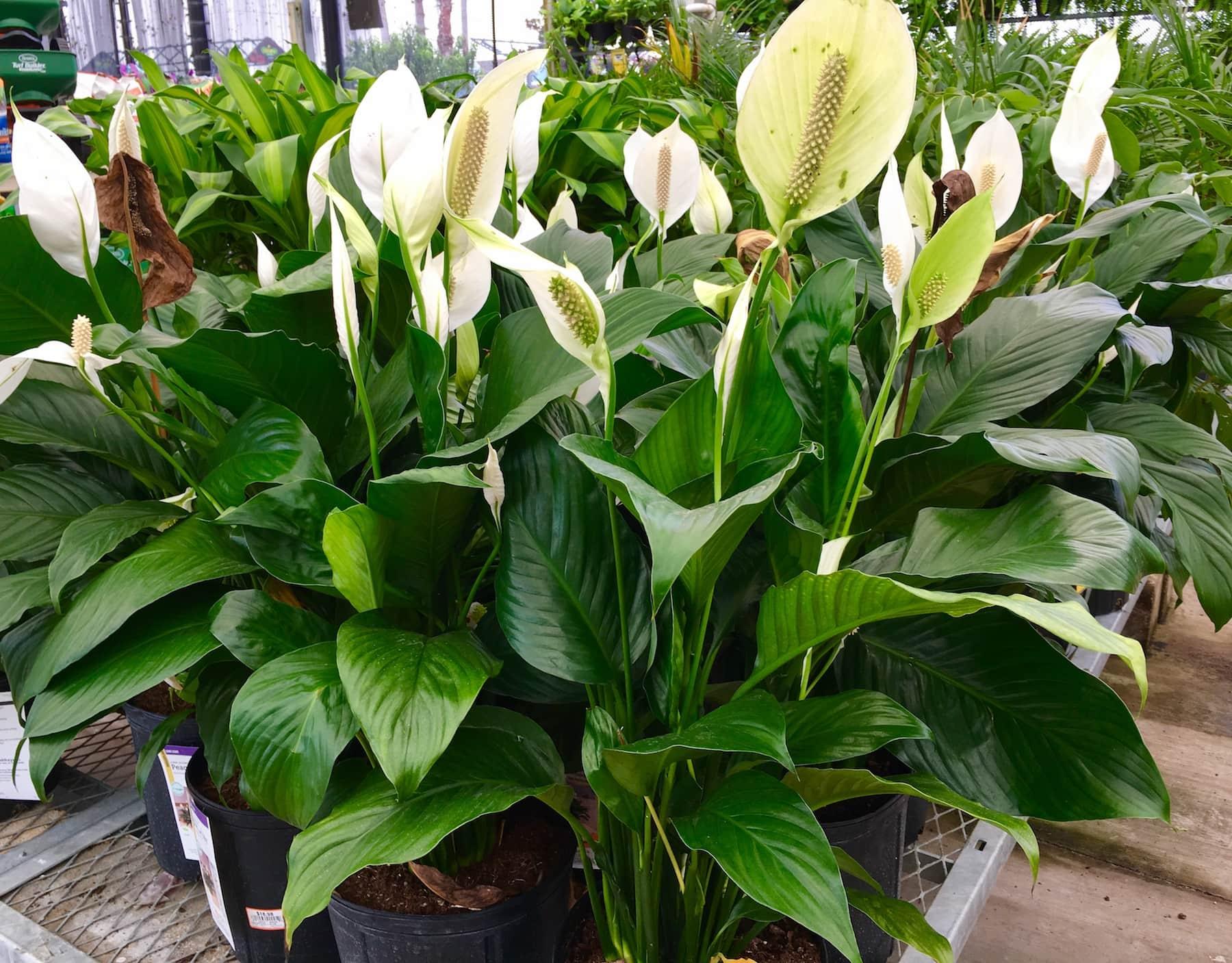 Best Bedroom Plants for Better Sleep - Get Green Be Well