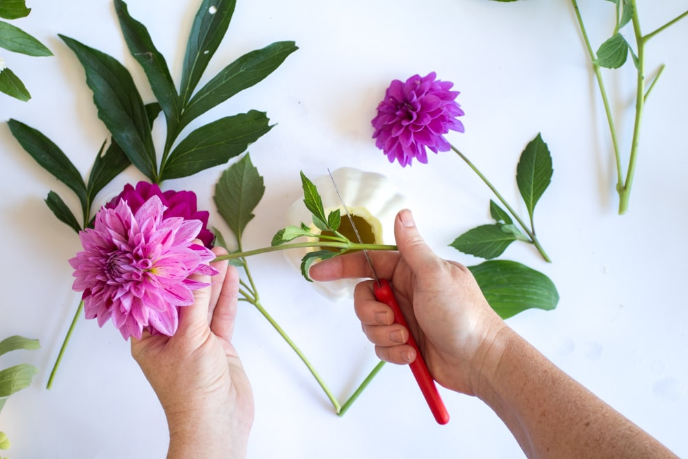 cutting purple flowers to put into white pumpkin flower vase