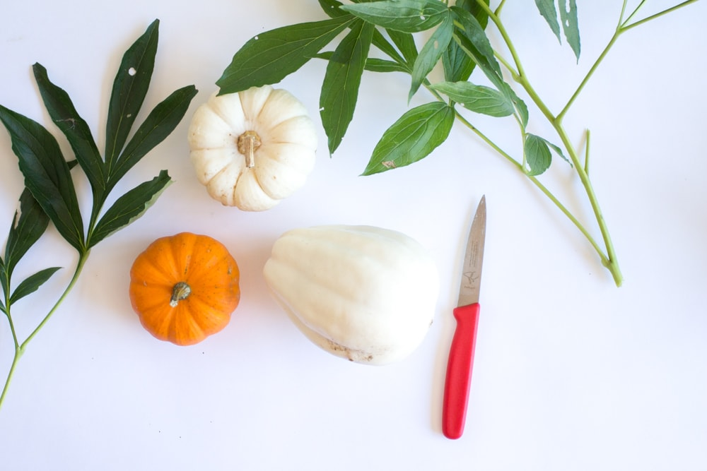white pumpkin orange pumpkin greenery and paring knife against white background
