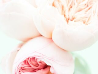 pale pink peonies in glass vase against mint green background