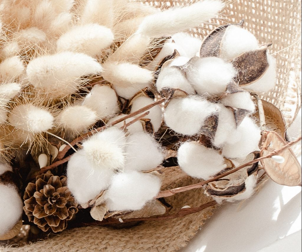 cotton plants on brown burlap