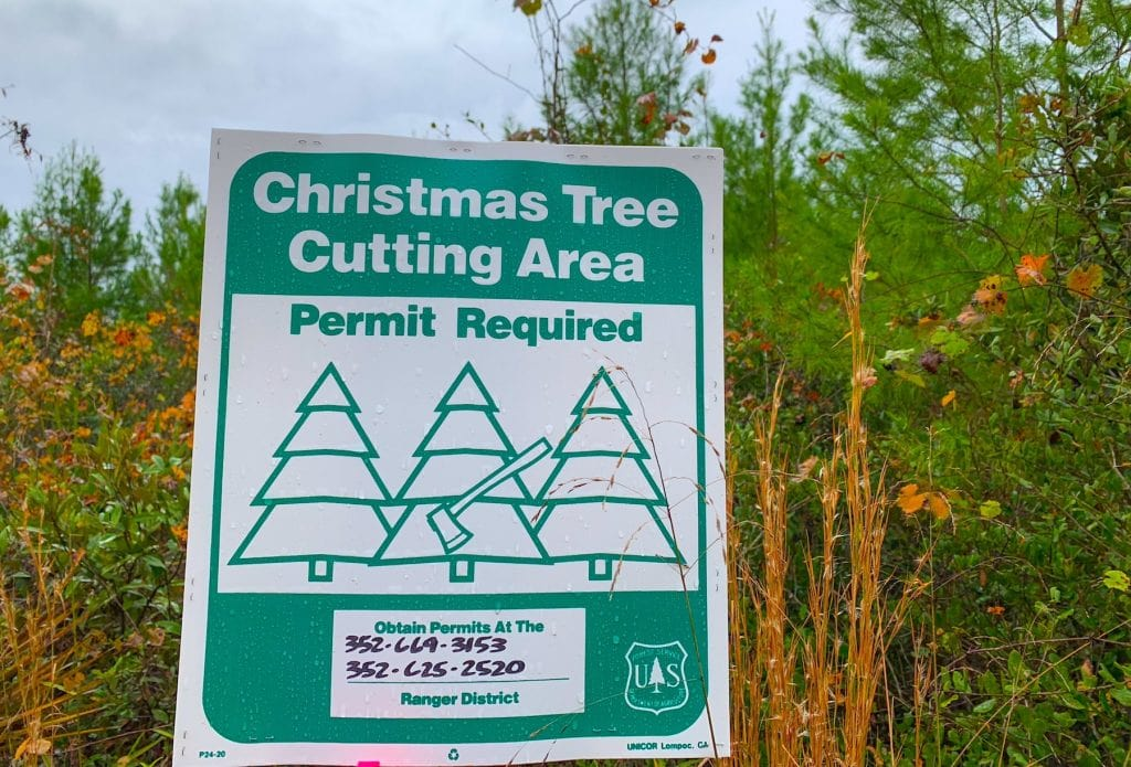 Christmas Tree Cutting Area Permit Ocala National Forest