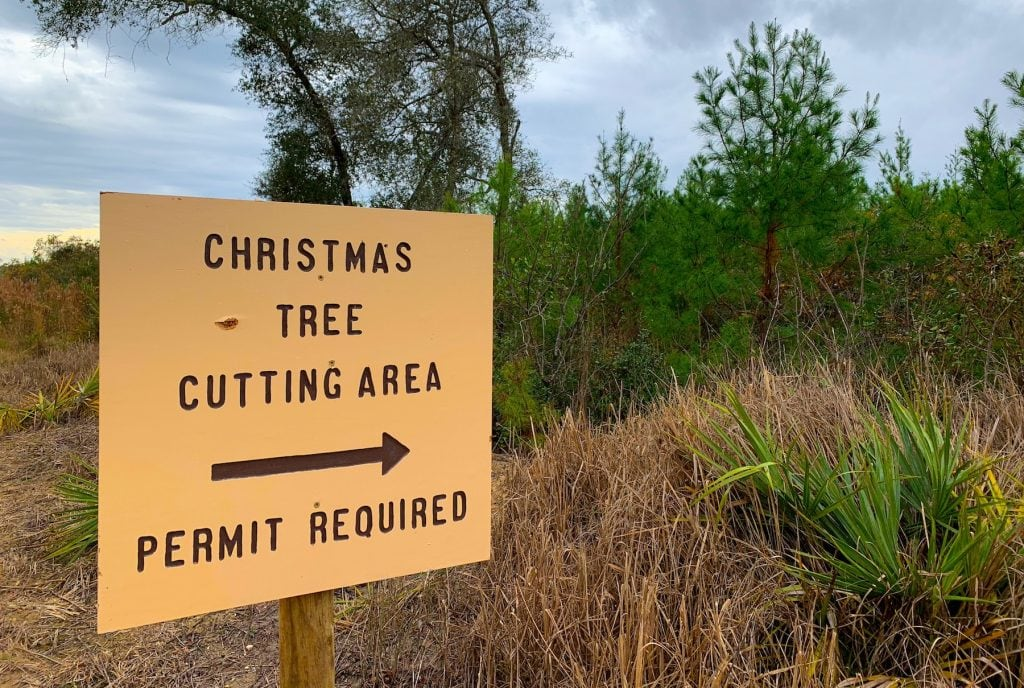 Christmas Tree Cutting National Forest Sign