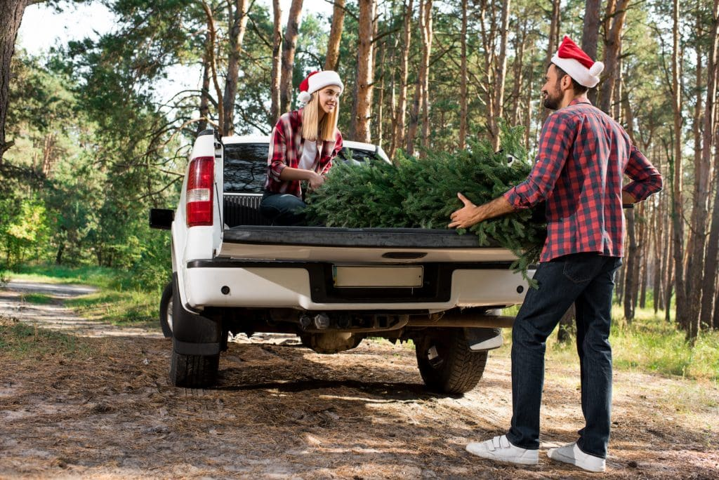 couple loading a cut Christmas tree into a white truck in a national forest