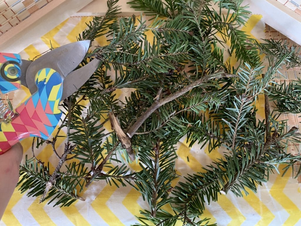 christmas tree branches cut up against white and yellow background with pruners