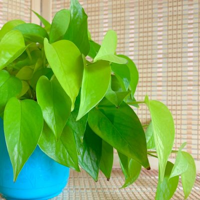 Indoor Plants that Clean the Air: How Do They Remove Toxins?