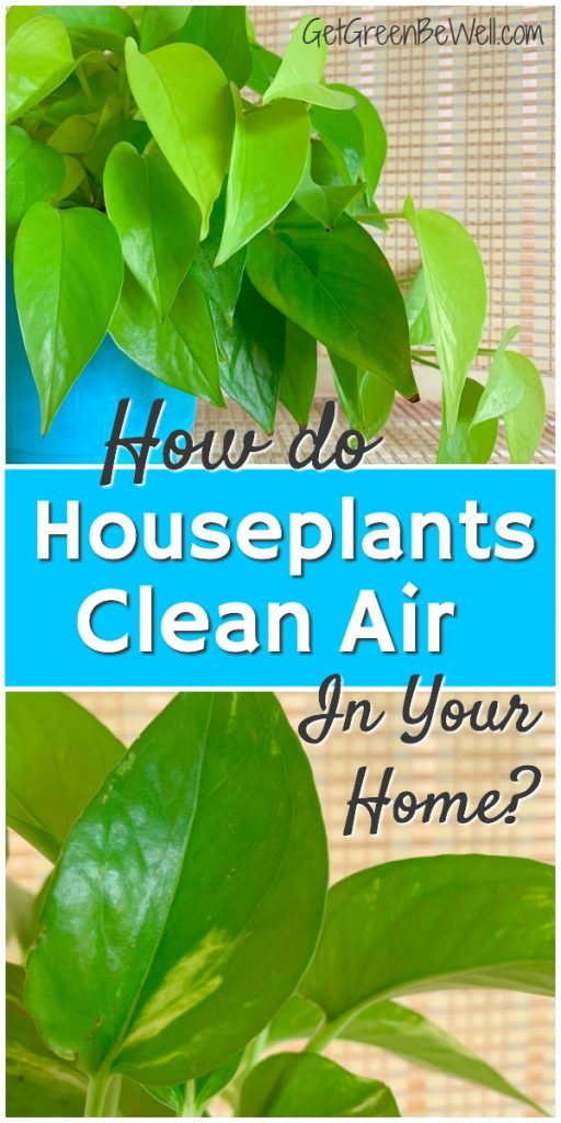green houseplants that clean air indoors