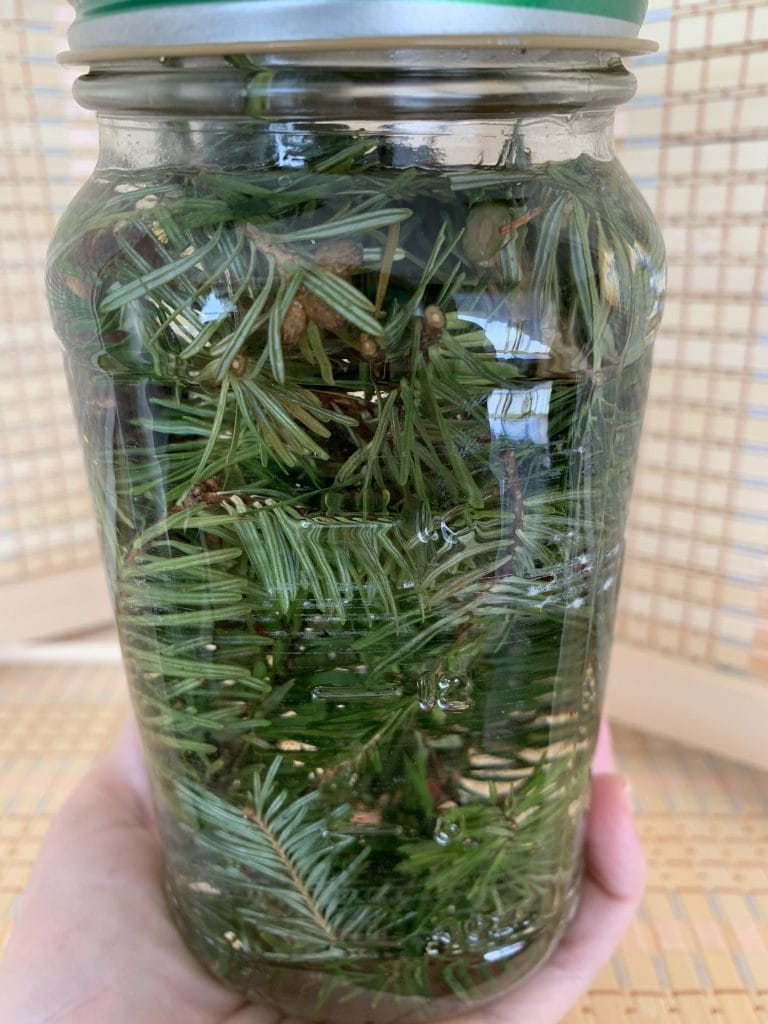 mason jar filled with pine branches for infused vinegar
