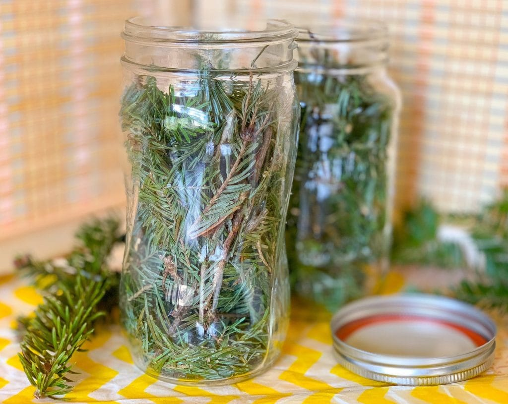 Pine Branches in Mason Jar for Green Cleaning Scented Vinegar