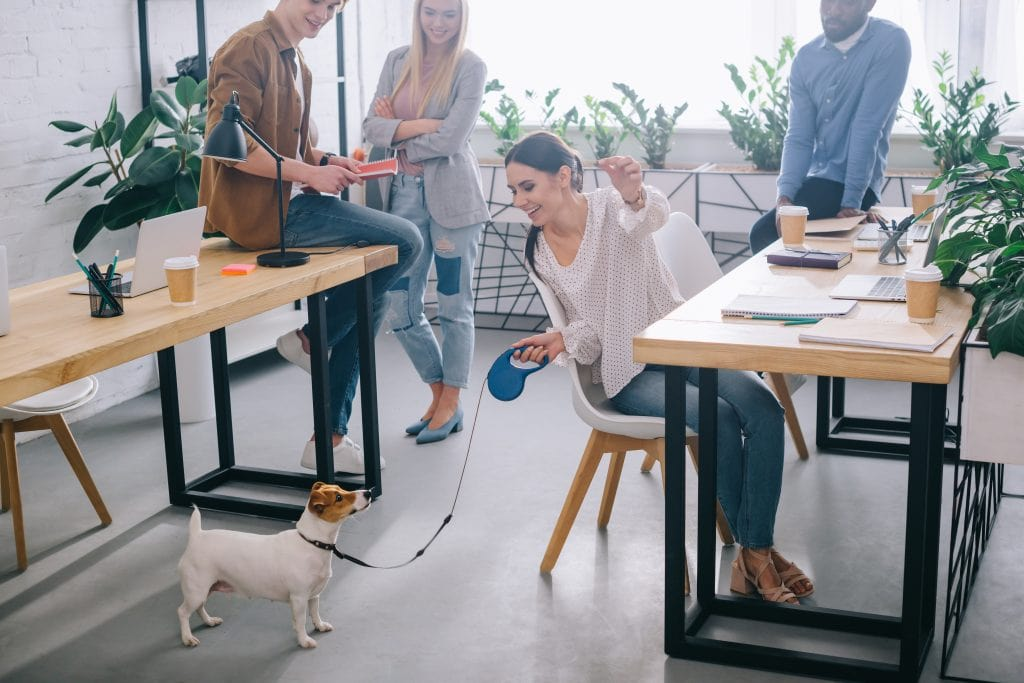 woman feeding dog while working at desk in office with big windows and lots of plants wellness architecture