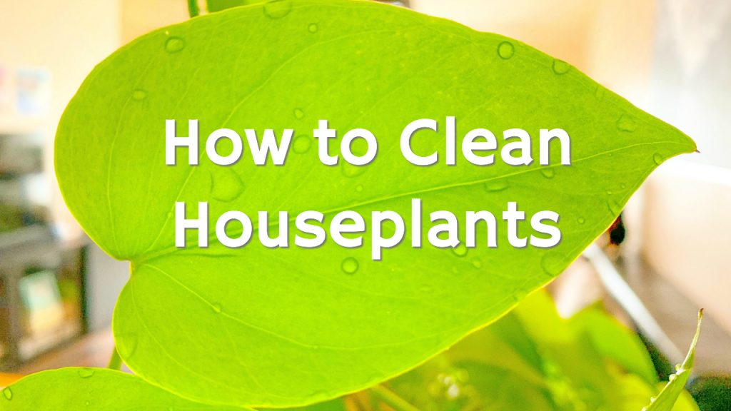 How To Clean Houseplants For Better Air Purifying Get Green Be Well